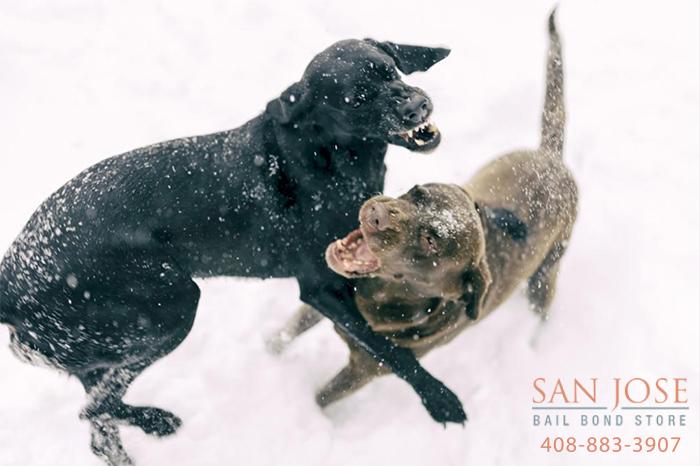 dog fighting penalties in California