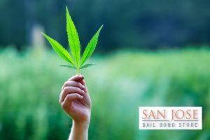 sunnyvale bail bonds
